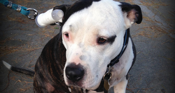 BAILEY STILL NEEDS OUR HELP ~ WE'RE ALMOSTTHERE!