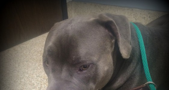 SHADOW TAKEN TO PRIVATE VET FOR CARE, PLEASE HELP!